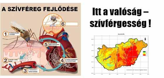 Ebáldozatait szedi a szívféreg Békésben