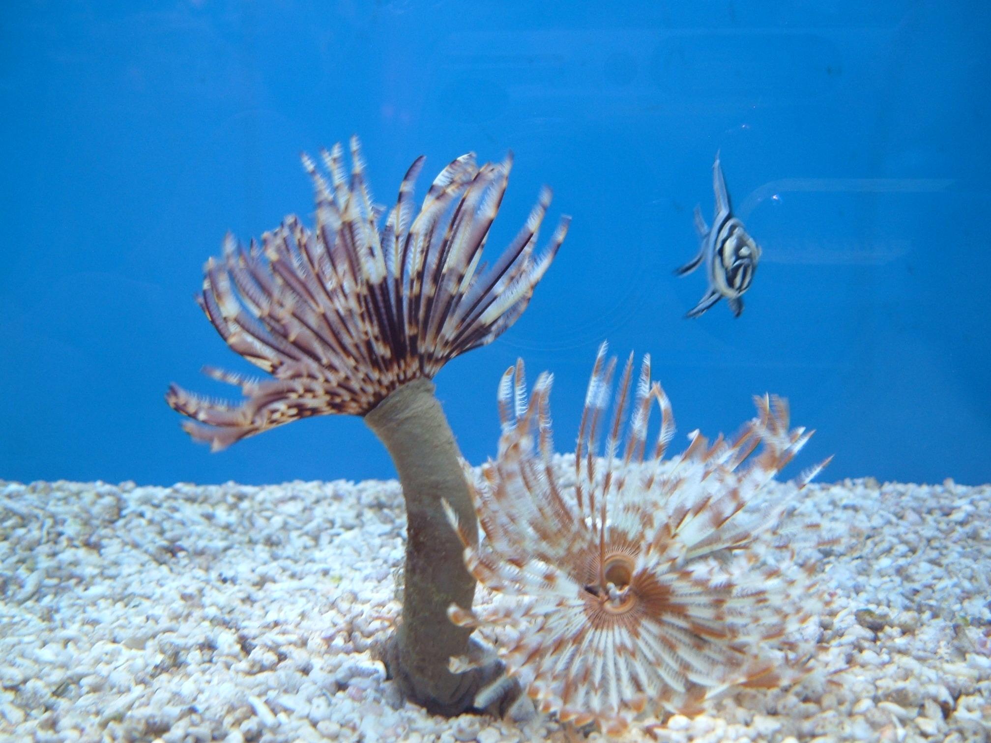 tengeri gyurusféreg
