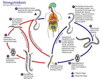 helminthiasis icd 10 a gyermekek számára féregkészítmények neve