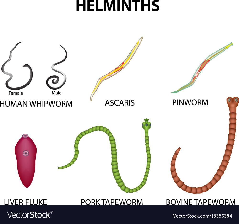 pinworm helminths gyógyszer