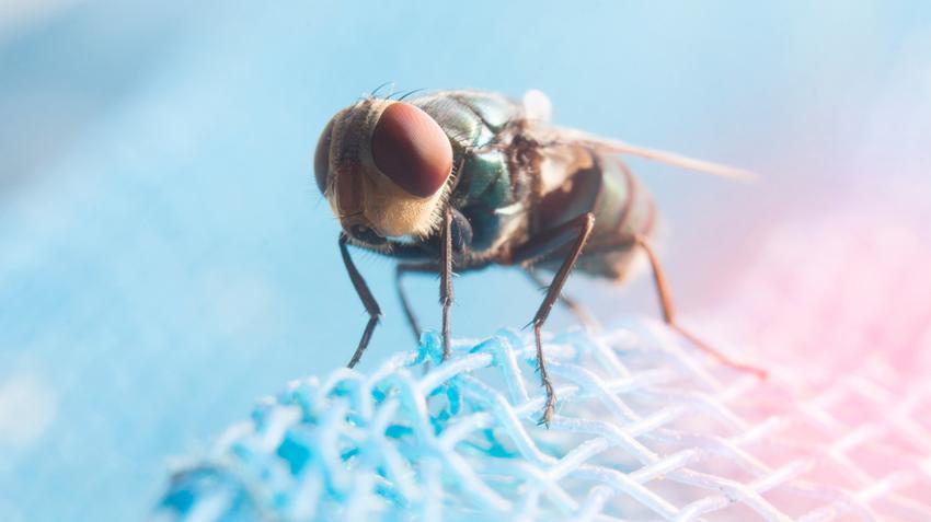Todicamp parazita kezelés mososzappan a parazitak ellen