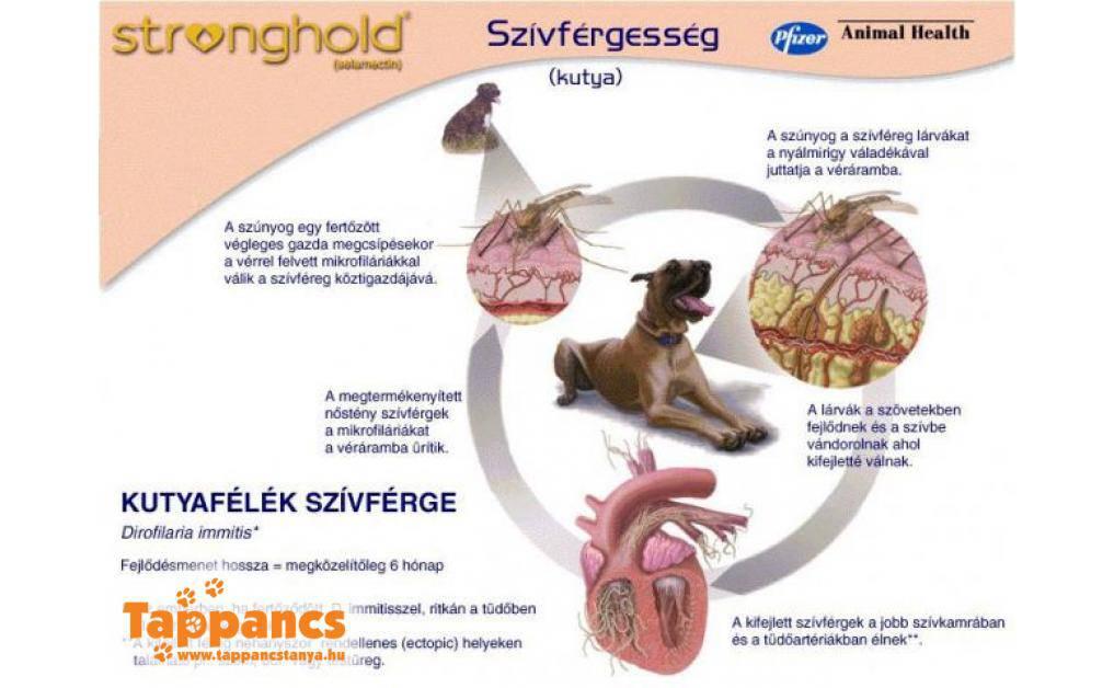 szivfergesseg megelozo gyógyszer