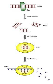 a giardiasis jelentése kettőspont tisztít test méregtelenítő