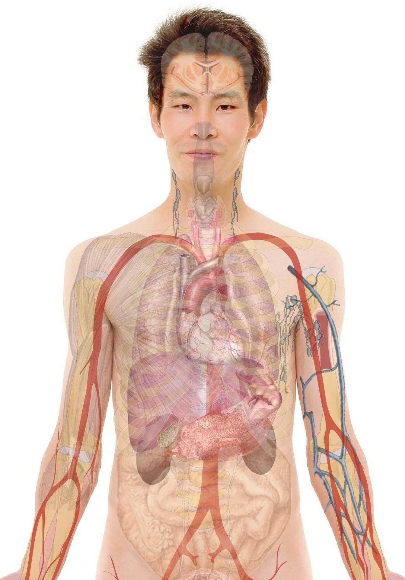 az emberi testben található paraziták ostorféreg emberben