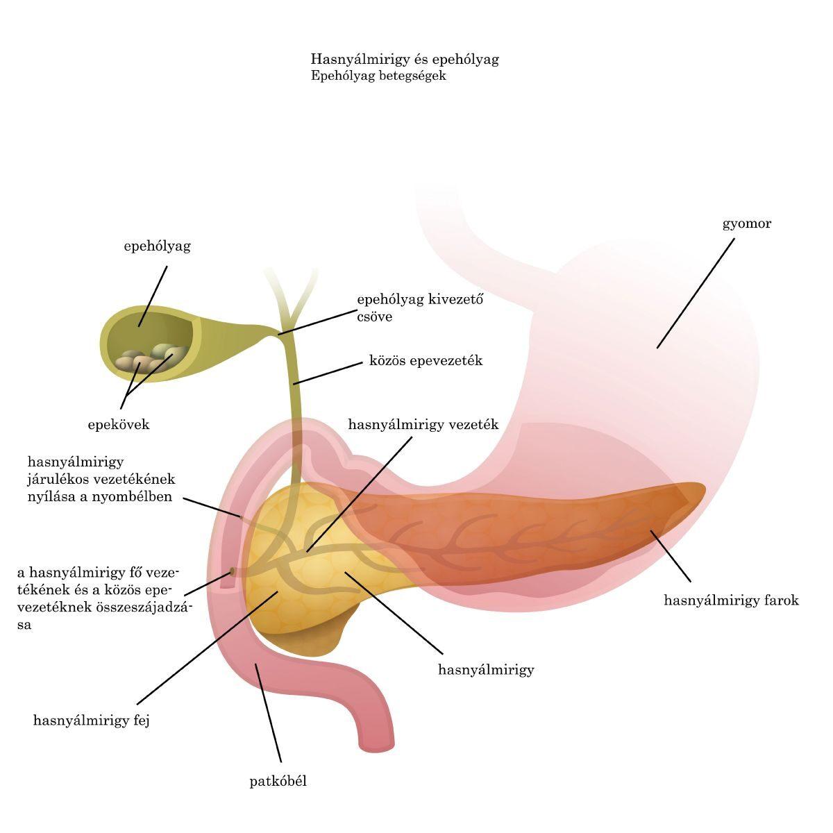 gyógyszerek a giardiasis kezelésére