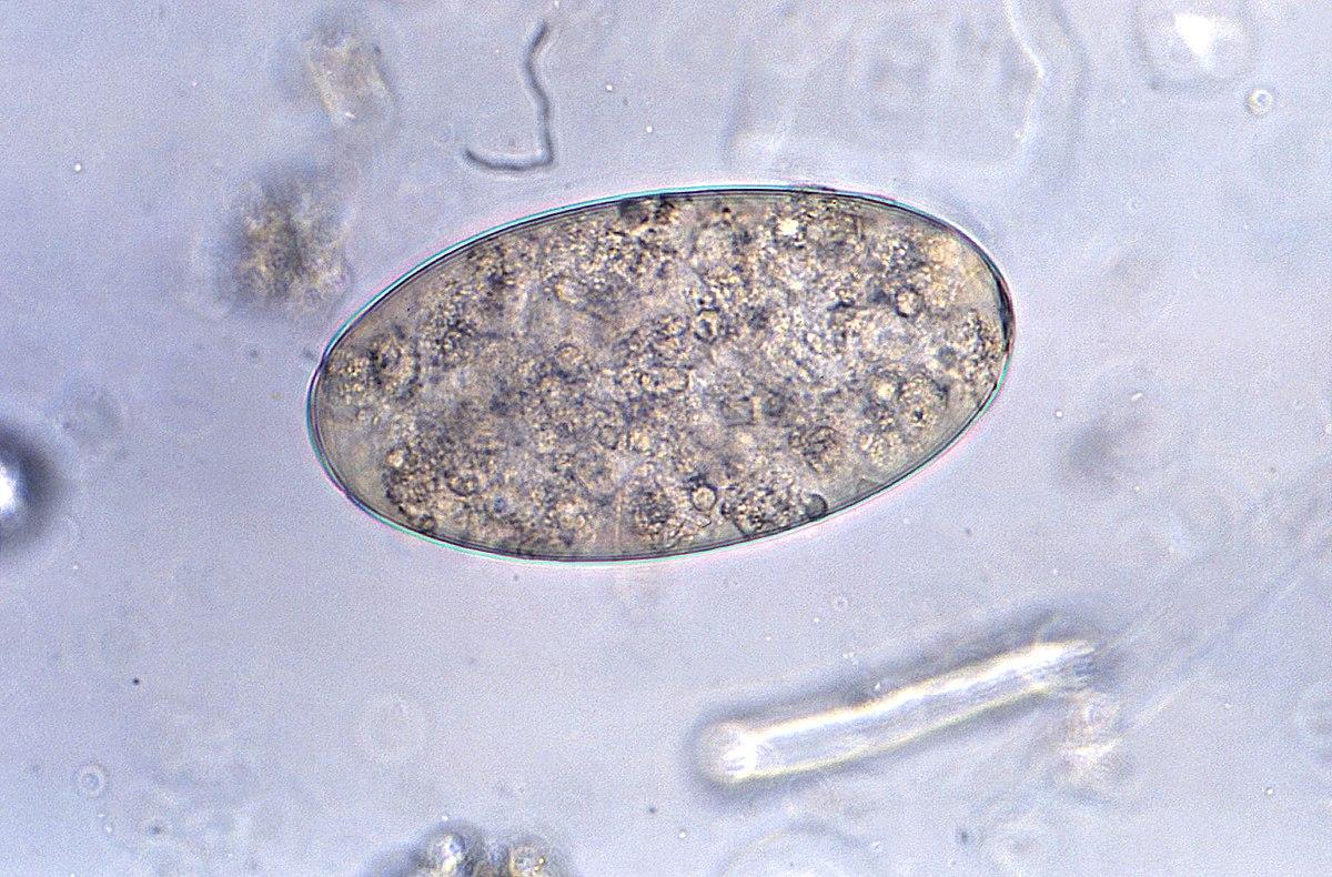 tabletták az emberi test minden parazitájából férgek tünetei felnőtt gyógyszerekben