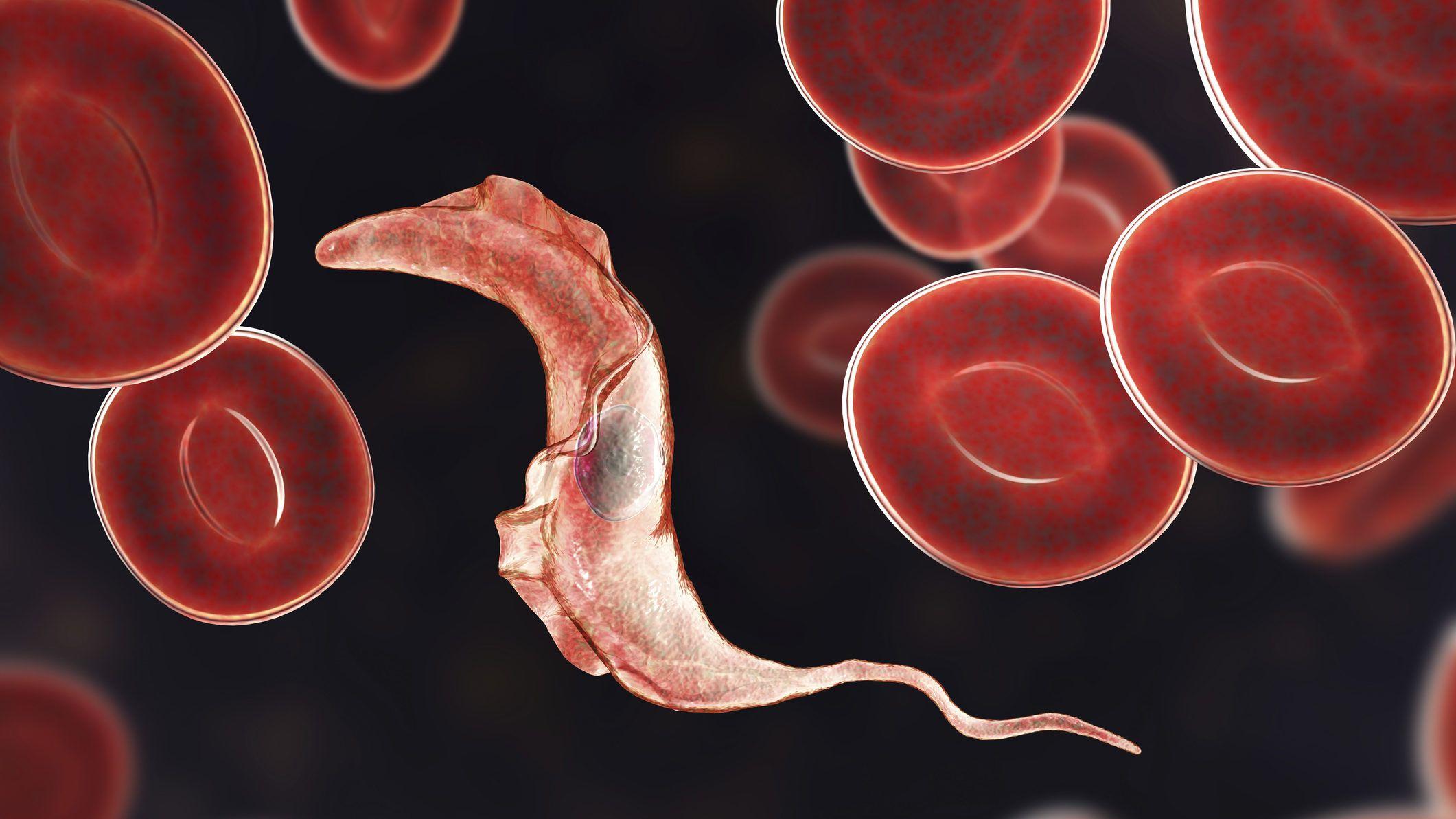 jó féreg gyógyszer vélemények paraziták és kölcsönhatásosok ppt